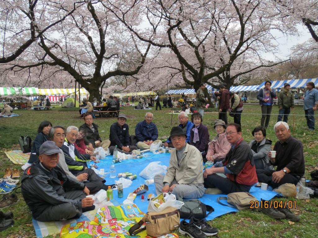 IMG_0164 桜の下での宴会(全員)