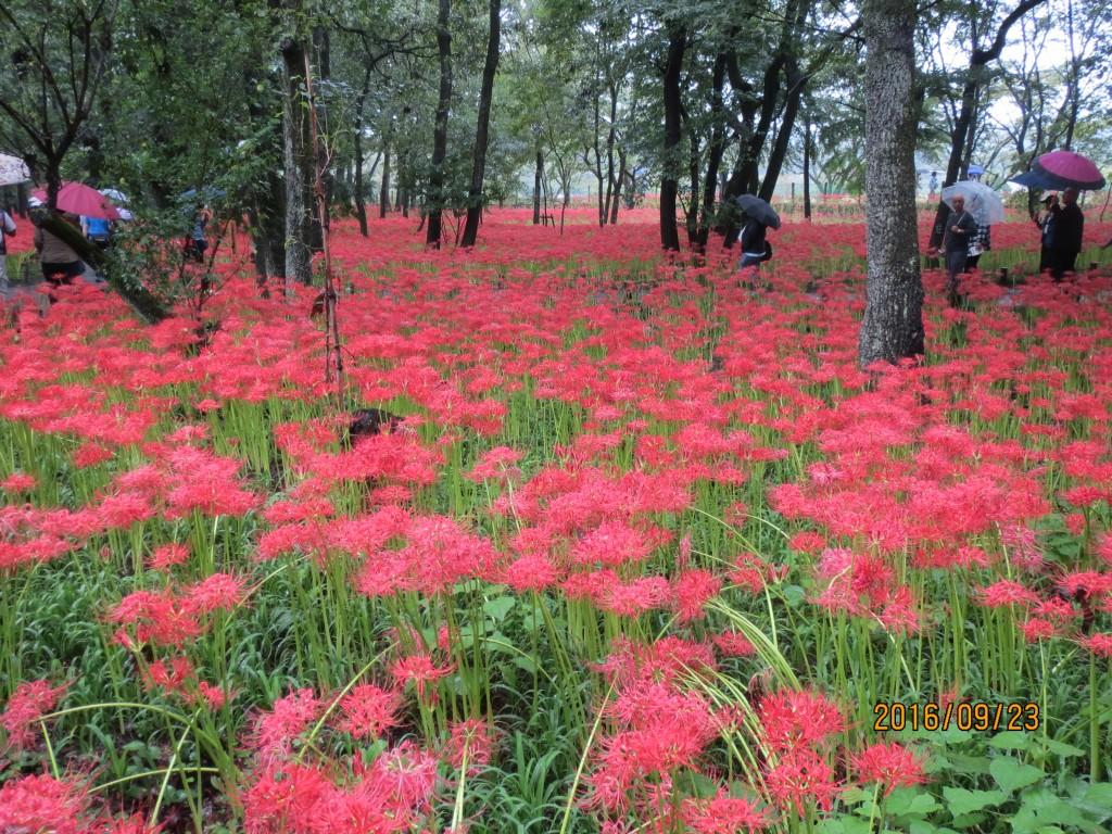IMG_0286 花畑