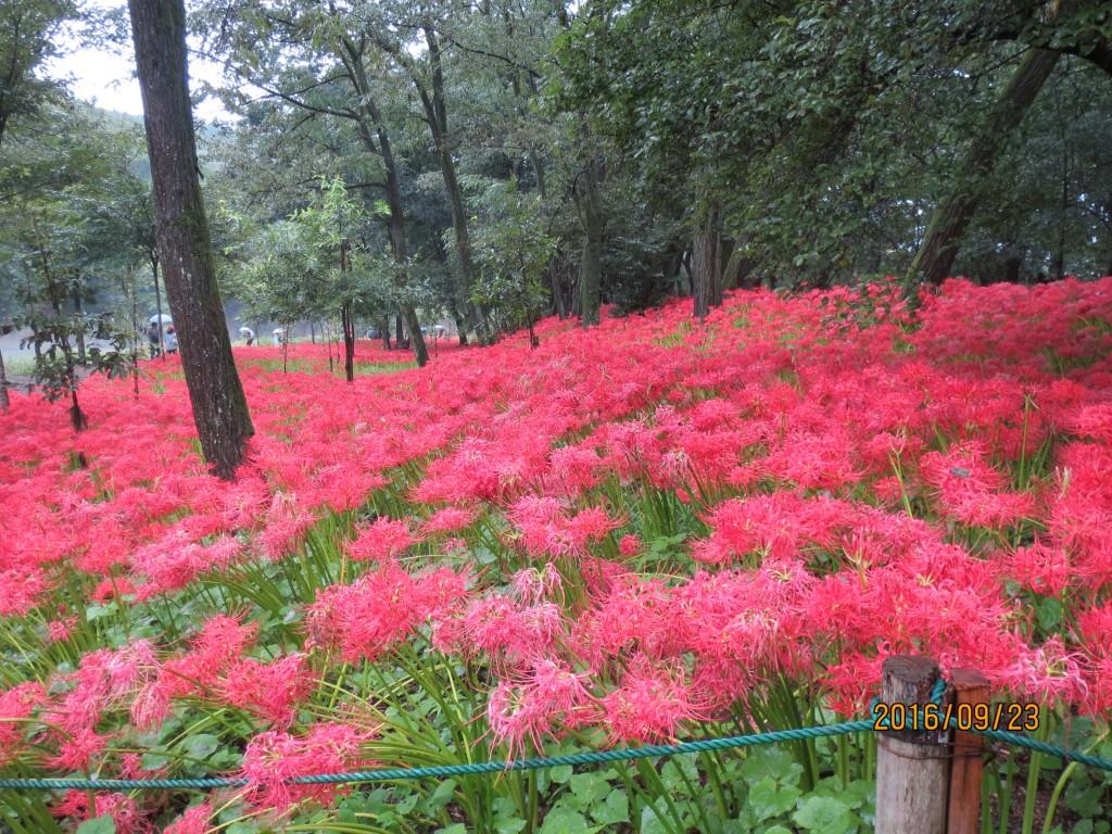 IMG_0288 花畑